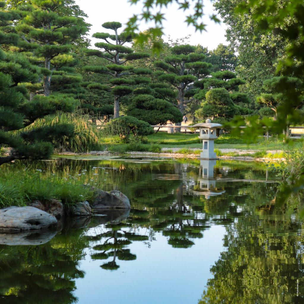 Foto vom Japanischen Garten in Düsseldorf im Sommer mit Spiegelung im Teich.